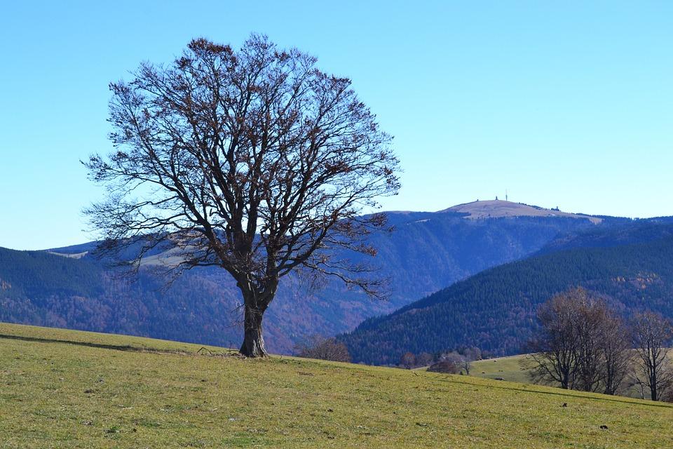 OB wegen Wahlkampf, wir wegen Bäumen!