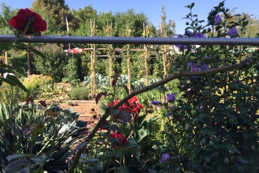 Klein Garten
